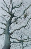 10_john-islip-street-tree-2_v2.jpg