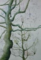 10_john-islip-street-tree-3_v2.jpg