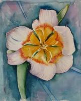 9_tulip-mod.jpg